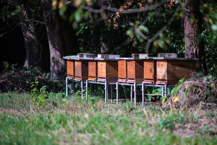Beehives in the sun on the edge of a meadow.