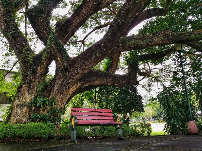 Under the shade of a great big tree Eyeem Philippines Bench Tree Big Tree No People Outdoors Landscape Mountain UP Los Baños