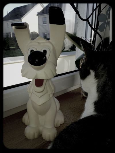 Mein Schmusetiger und sein neuer Freund Idefix :-D Idefix Katze Blick Aus Dem Fenster Kater Spardose Catlove Schnurr Katzenfoto Katzenplatz Cats 🐱 Cat Lovers Katzenliebe Cat Catlover Catlovers