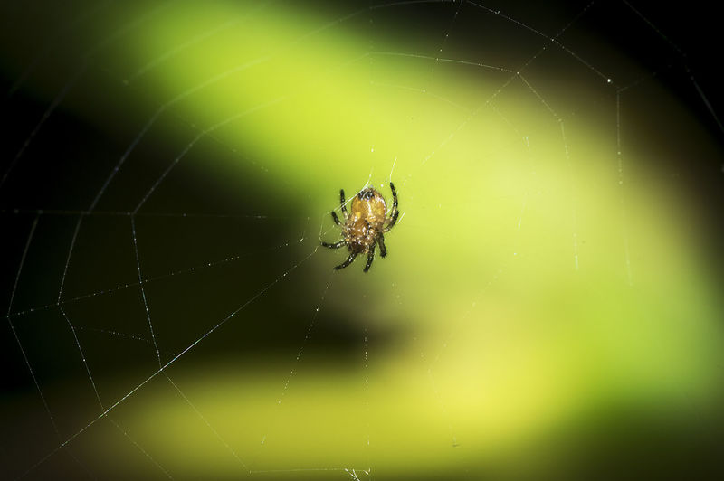 Nano Monster Animal Leg Animal Themes Animal Wildlife Animals In The Wild Beauty In Nature Close-up Day Focus On Foreground Fragility Insect Nano Spider Nature No People One Animal Outdoors Spider Spider Web Spinning Survival Web