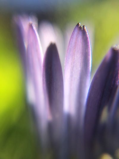 Playing with the #olloclip 15x #macro lens. Flowering Plant Flower Plant Beauty In Nature Growth Purple Close-up