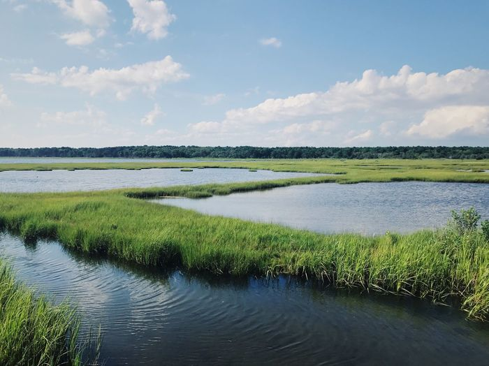 Plant Growth Nature No People Day Sky Landscape Outdoors Grass Tranquility Wetlands Atlantic