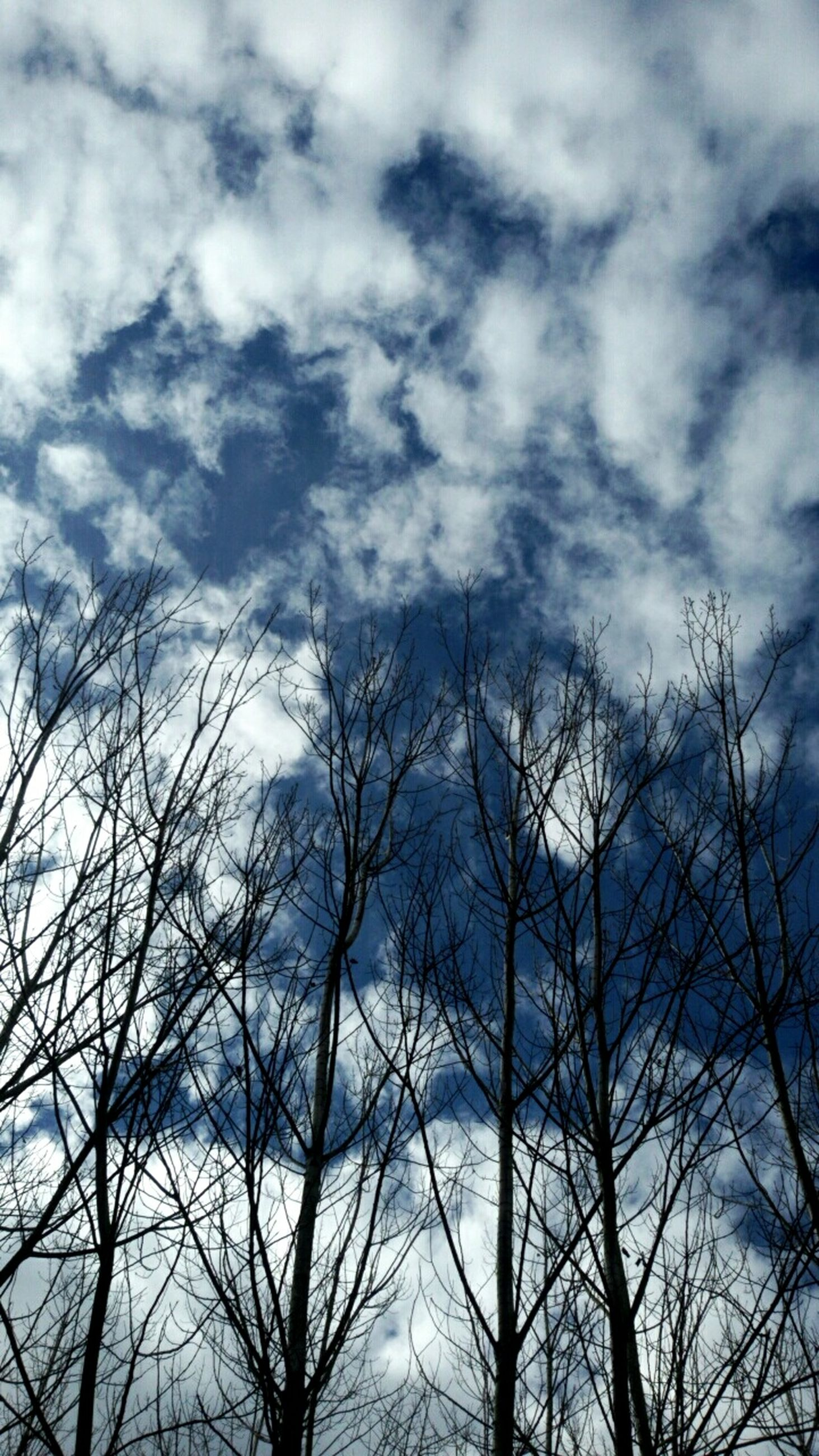 bare tree, low angle view, tree, sky, branch, cloud - sky, tranquility, nature, silhouette, cloudy, beauty in nature, scenics, cloud, tranquil scene, outdoors, no people, day, weather, high section, blue