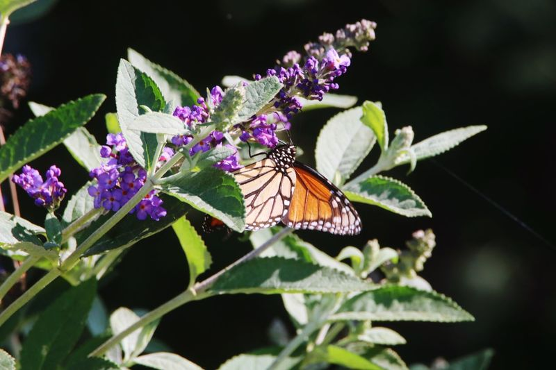 Insect Butterfly - Insect Animals In The Wild Animal Themes Fragility Flower One Animal Nature Leaf Butterfly Freshness No People Growth Plant Beauty In Nature Day Close-up Outdoors Pollination Animal Wildlife