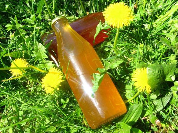 Bottle Green Color No People Grass Nature Music Beauty In Nature Flower Outdoors Freshness Close-up Day