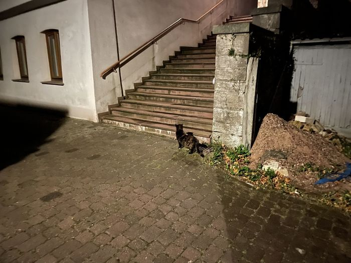 Cat walking on staircase