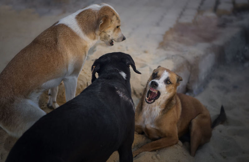 Animal Behavior Animal Themes Conference Dog Dog Conference Dog Meeting Domestic Animals Fighting Fighting Dogs Mammal Mouth Open Pets Playing Dogs Talking Dogs Togetherness EyeEmNewHere
