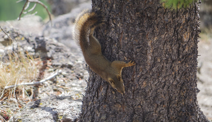 A squirrel eats nuts from a bird dumpling Animals In The Wild Climb Jump Nuts Sciurus Vulgaris Animal Themes Animal Wildlife Birdseed Croissant Diurnal Eat Fur Gray Squirrel Grey Croissant Hairs Rodent Squirrels Woollen Hair