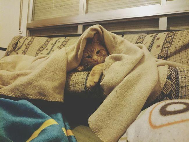 cosa preciosa Taking Photos Love Cats Catcatcat Relaxing