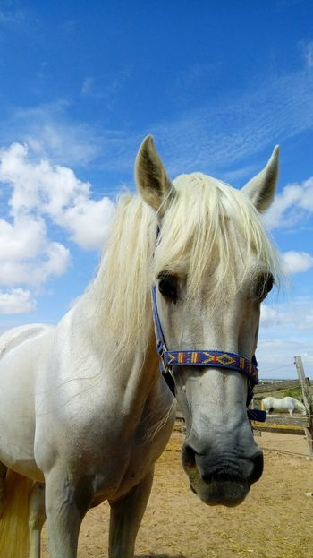 Sand Domestic Animals Sky One Animal Day Cloud - Sky No People Outdoors Mammal Animal Themes Nature Close-up Horse White Horse Portrait