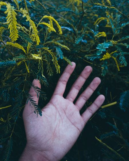 Cropped image of hand with plants