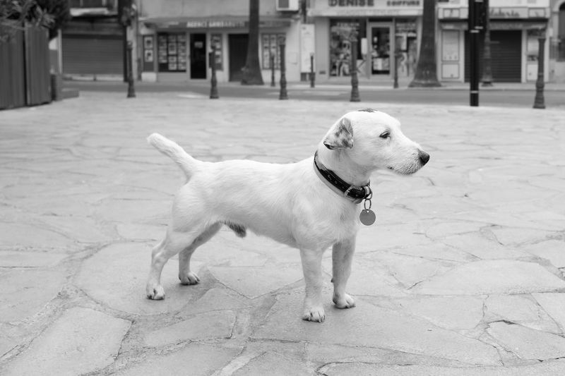 Small dog Bnw Bnw_captures Bnw_collection Bnw_life Dog Mammal Pet Collar Pets Portrait Small