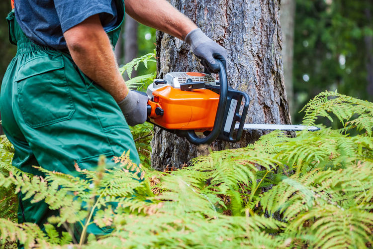Midsection of man cutting tree
