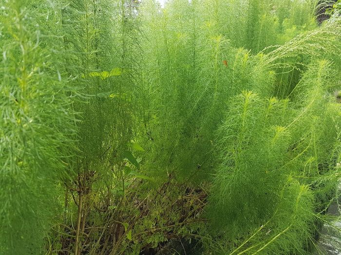 Close-up of grass growing in forest
