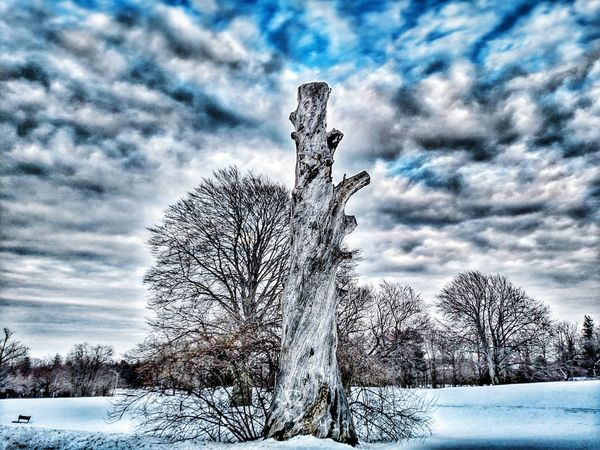 Psycho Clouds Sky Dramatic Sky Nature The Human Condition Spooky Atmosphere Long Island New York Tree