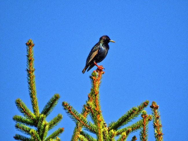 Bird Drozd Ptak Thrush