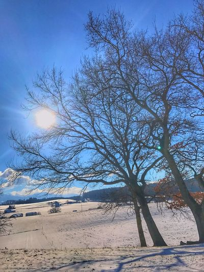 Bare Tree Nature No People Sky Outdoors Tranquility Tree Branch Day Beauty In Nature Cold Temperature