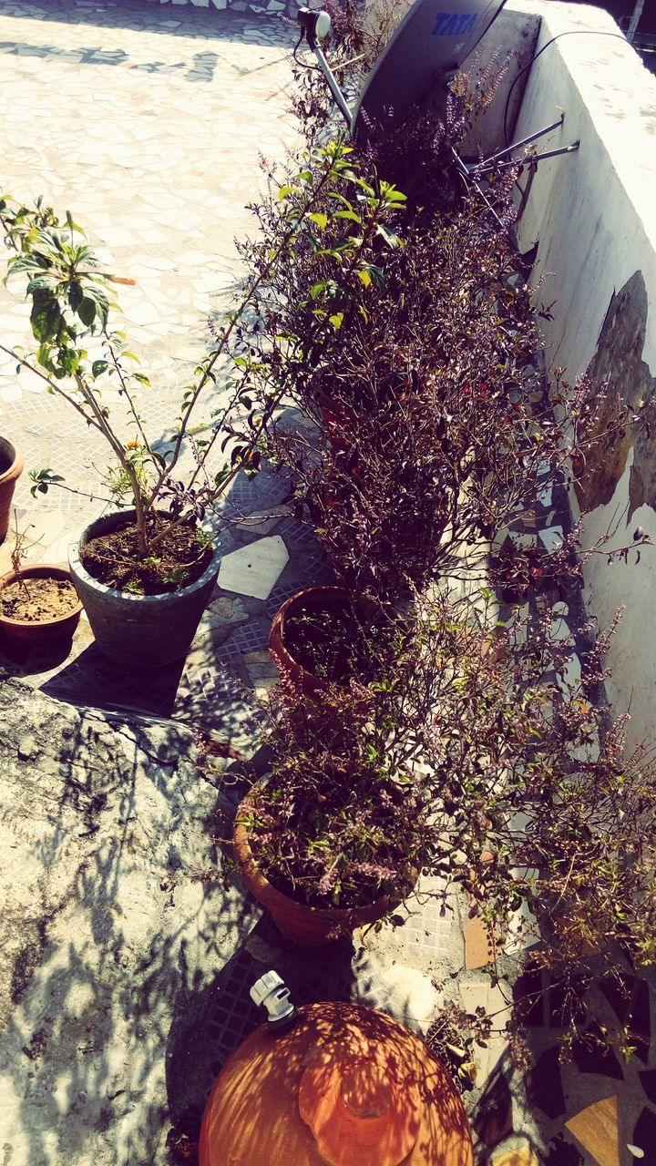 growth, plant, potted plant, nature, no people, day, high angle view, outdoors, freshness, close-up, beauty in nature