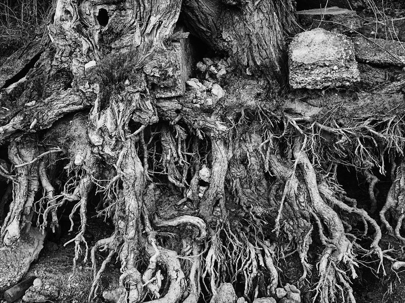 Full Frame Backgrounds Textured  Close-up No People Outdoors Nature Tree Day tree Tree Roots Shore Blackandwhite