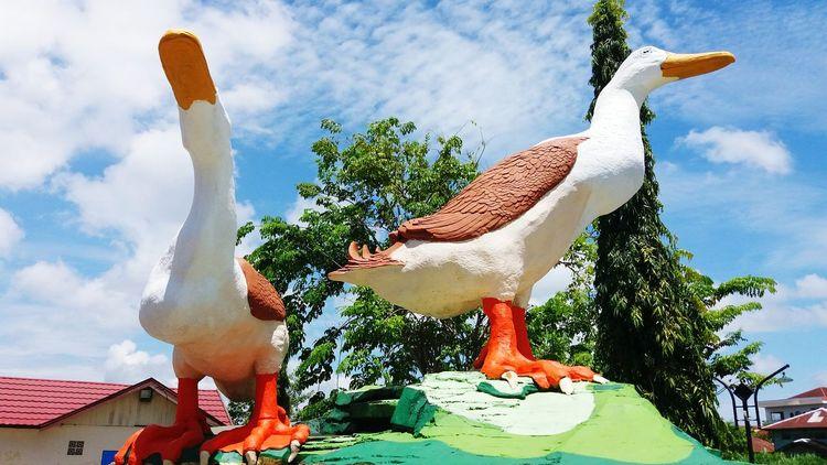 ItikAlabio Kalimantanselatan