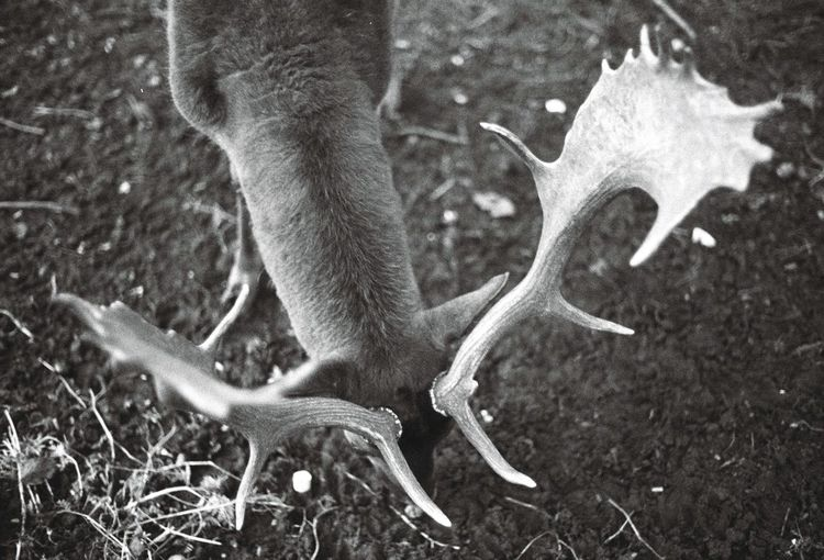 New year forms 3/4 Deer Antler Animal Themes Animals In The Wild Mammal Animal Wildlife Outdoors No People Day Nature