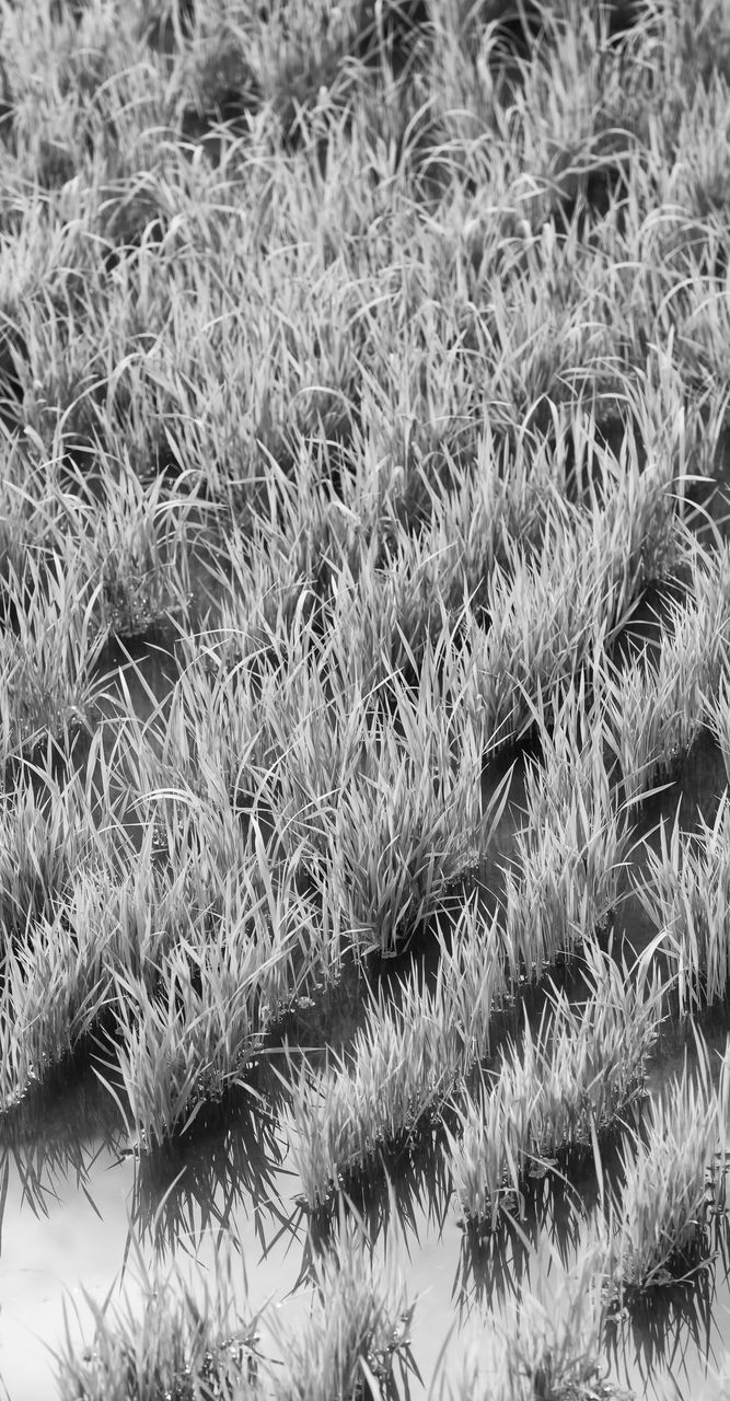 full frame, no people, close-up, backgrounds, plant, growth, nature, grass, day, pattern, high angle view, softness, outdoors, field, land, beauty in nature, winter, textured, textile, warm clothing