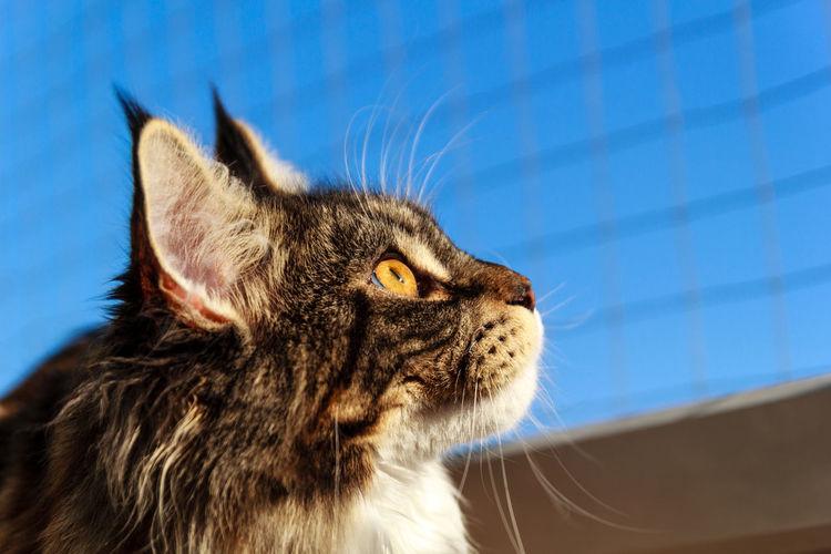 Close-up portrait of cat against sky