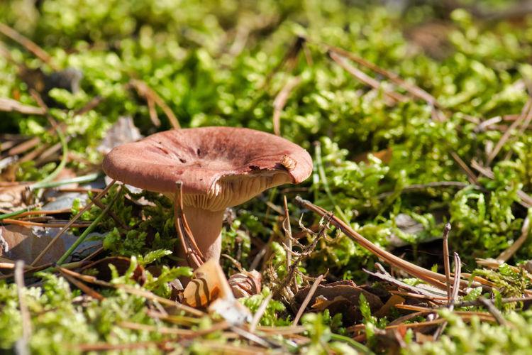 Mushroom in