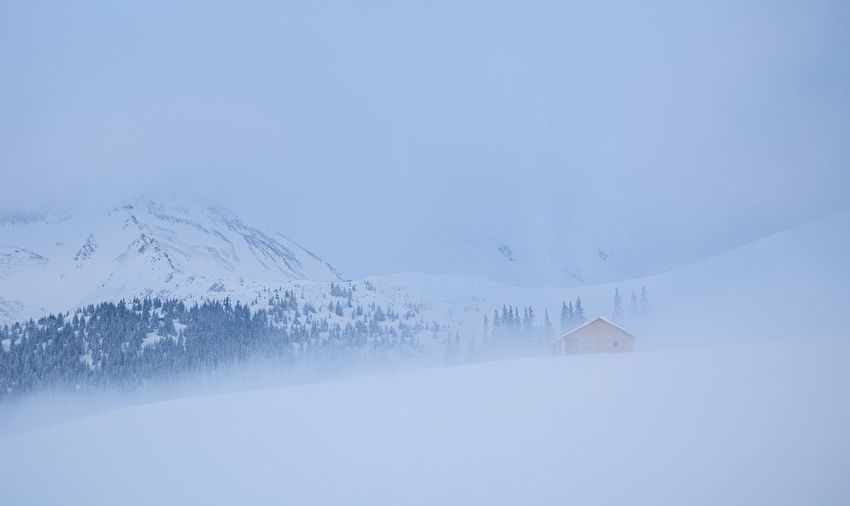 Winter landscape from rodnei mountain. a cold foggy morning with heavy snow.