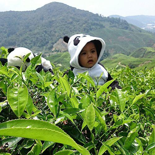 Anak panda lepak2...🐼🐼 Khalisharyan Aryancomelcerdik SonShine Khalishdiary Nature