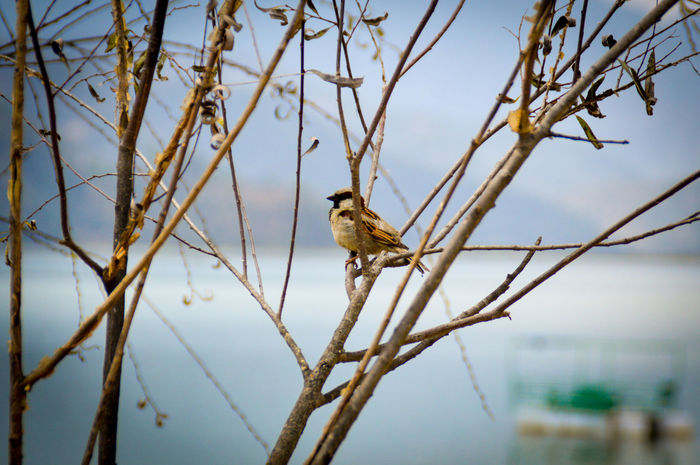 Sparrow On A Branch Sparrow Bird One Animal Tree Branch Animals In The Wild Animal Wildlife Perching Animal Themes Bare Tree Nature No People Outdoors Beauty In Nature Sky Bird Day Close-up Backgrounds Copy Space