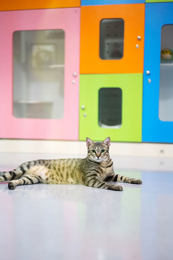 Portrait of a cat in the daycare center