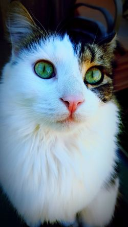 Green eyes cat Cat Lovers Green Cat Eyes