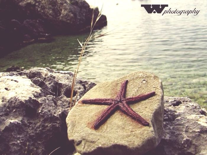 Star Star Wphotography Red Stone Seaside