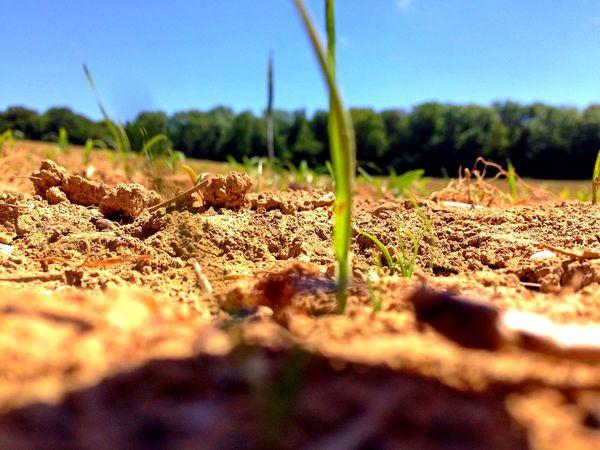 Feld Erde Grashalm