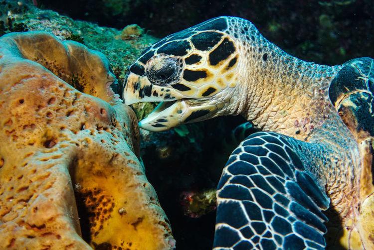 🐢yum yum!~🐢 Animal Wildlife Underwater UnderSea Sea Animal Sea Life Animals In The Wild Nature Reptile Water Summer Travel Destinations Grandturk Paradise Turksandcaicos Vacations Underwater Diving