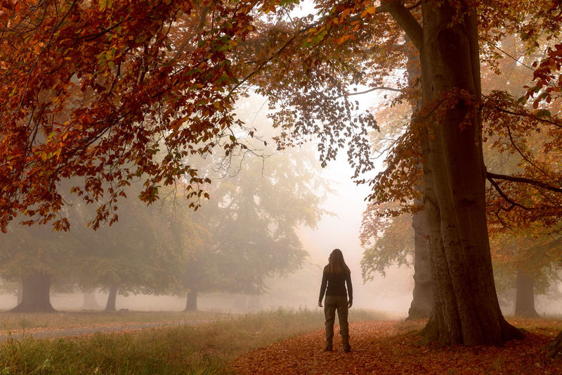 Klampenborg Denmark Copenhagen Jægersborg Dyrehave Deer Park Woman Tree Plant Real People Rear View One Person Nature Change Beauty In Nature Growth Trunk Lifestyles Full Length Land Autumn Tree Trunk Fog Leisure Activity Tranquility Day Outdoors