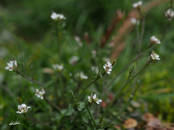 それぞれの旅立ち E-PL3 Whiteflower Flower Tiny Flower 今日だって誰かの誕生日 Noedit