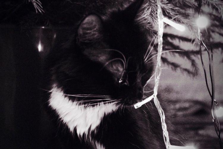 Pets Domestic Cat Domestic Animals Cat Tranquility Atmosphere Beutiful  Blaskandwhite кот Домашний питомец атмосфера чернобелое
