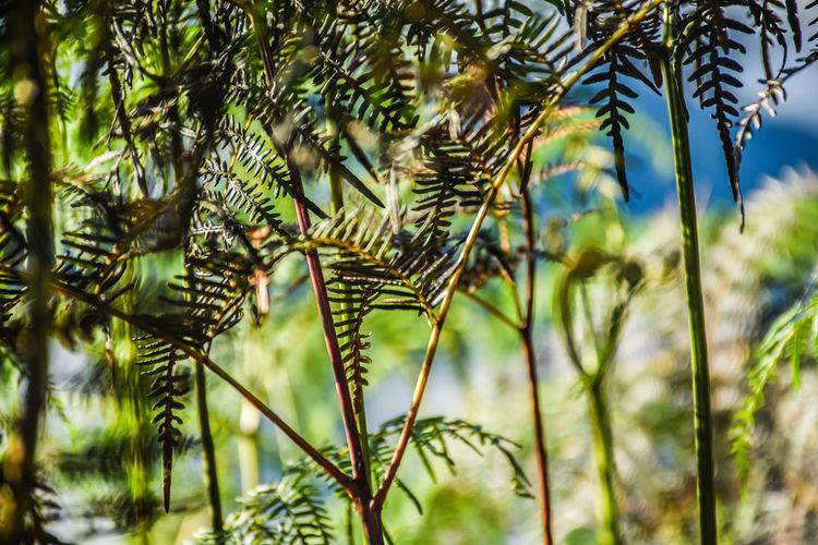 Growth Tree