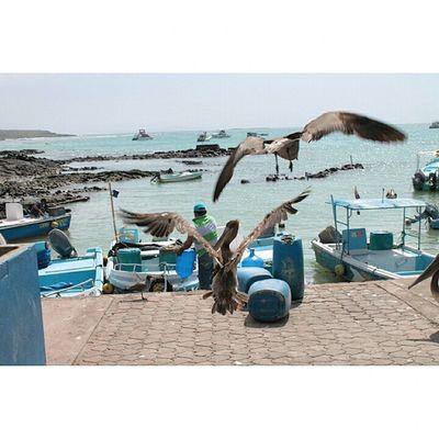Galapagos Ecuador AllYouNeedIsEcuador IslaBaltra Ptodelospescadores Love MiPais Canon Canon_official Canonecuador Fotografosecuador