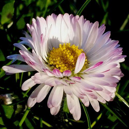 Centrotavola...per cena. Flower Nature Fragility Day Petal Freshness Primavera Brilla Nell'aria....