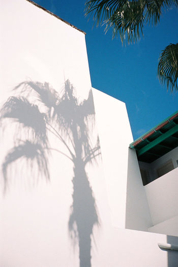 Analogue Photography Architecture Building Exterior Built Structure Day Low Angle View No People Outdoors Palm Tree Palmtrees Shades Of Grey Shadow Silhouette Sky Sunlight Tree