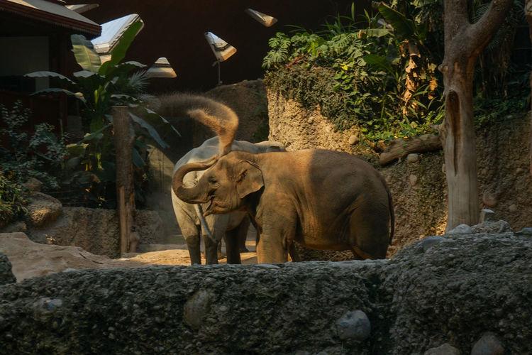 Elefant Elephant Tree
