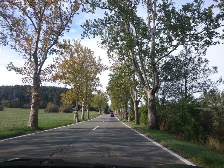 Trip Driving Driving In My Car Trees The Way Forward Road Transportation Land Vehicle Nature Growth Day Outdoors Beauty In Nature No People