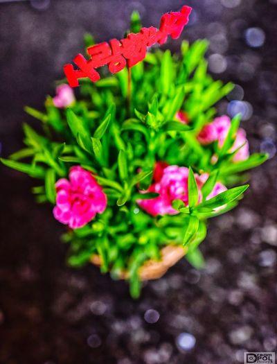 감사합니다. Beauty In Nature Blooming Close-up Day Flower Flower Head Fragility Freshness Green Color Growth Leaf Nature No People Outdoors Petal Plant 부모 사랑 은혜 은혜로운 카네이션