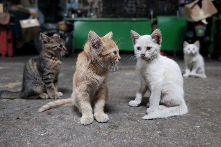 Kittens sitting on street