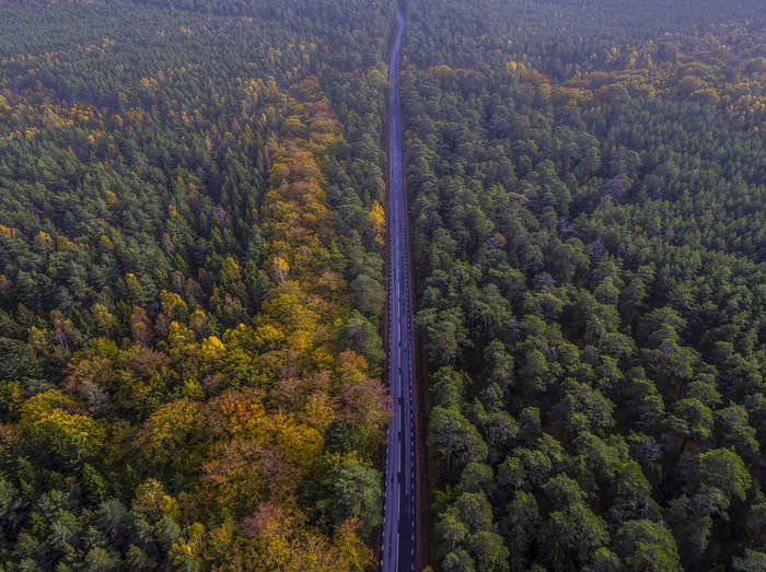 The road to... Aerial Shot Autumn Autumn Colors Fall Colors Road Sweden Aerial Photography Aerial View Aerialphotography Beauty In Nature Day Fall Forest Green Color Growth High Angle View Landscape Multi Colored Nature No People Orange Color Outdoors Scenics Tranquility Tree