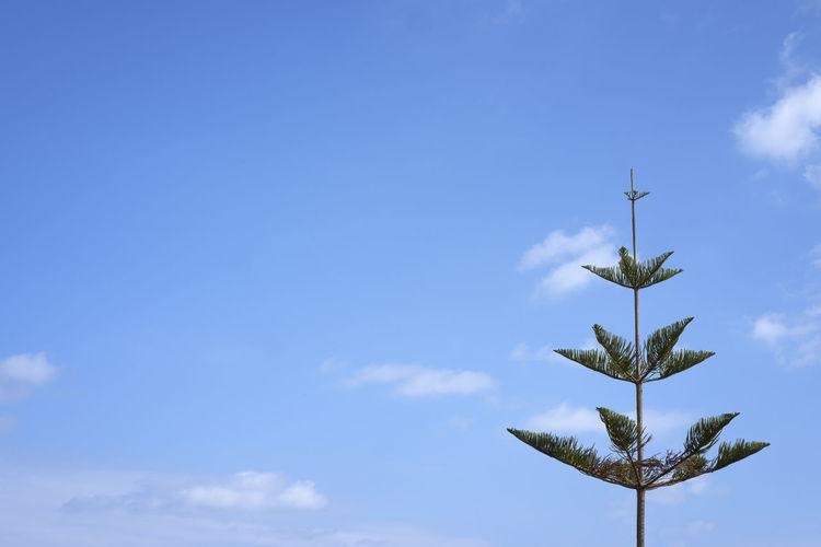Malta Maltaphotography Maltascapes Malta♥ Design Photo Design Nature Design Trees