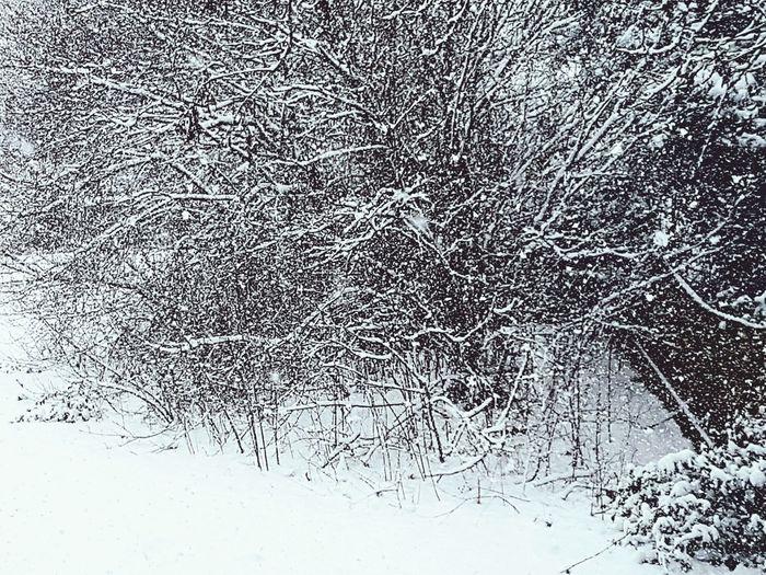 winter chills Weather Snow Snow ❄